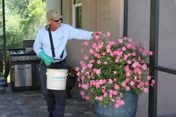 Potted Plant Service3