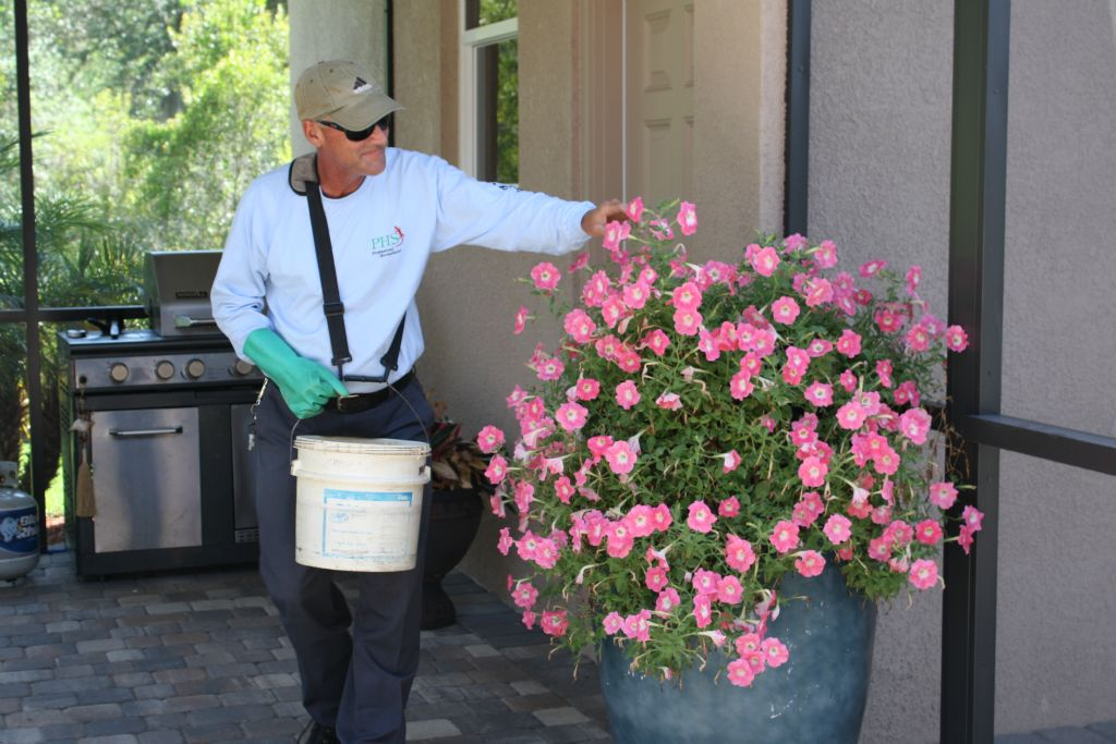 hillsborough county pest control insect lawn care